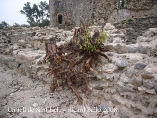 Castell de Sant Iscle. Vegetació eliminada de l'interior del castell.