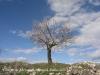 Torre de Mejanell - La primavera ja ha arribat ...