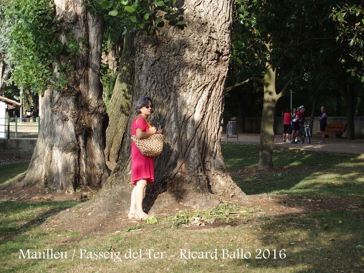 Manlleu - Passeig del Ter - Notables exemplars d'arbres