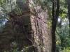 Torre del Telègraf – Bescanó