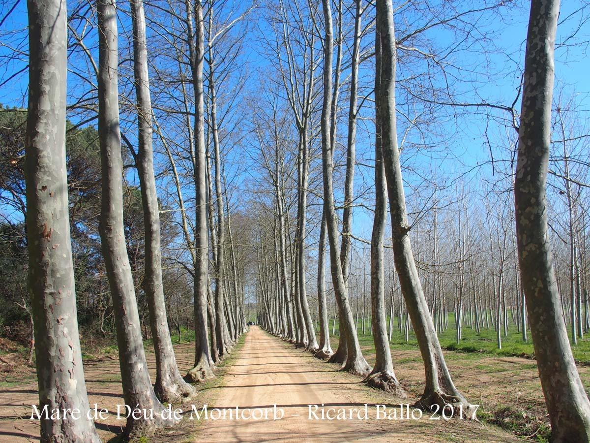 Camí d'accés a la Capella de la Mare de Déu de Montcorb – Riudarenes