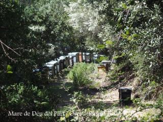 Camí a la Capella de la Mare de Déu del Part – Osor