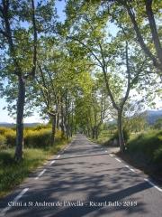 """Capella de Sant Andreu de l'Avellà – Font-rubí - Itinerari - Carretera. BP-2126, una carretera de les """"d'abans"""", amb plataners a banda i banda ..."""
