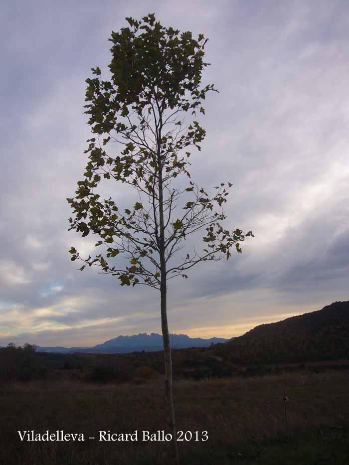 Montserrat, des de Viladelleva – Callús