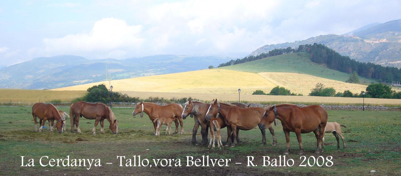 tallo-080712_501bis