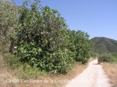Camí al castell de Can Ferrer de la Cogullada.