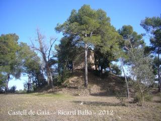 castell-de-gaia-120308_507