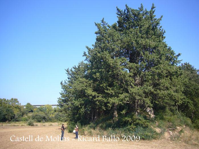 castell-de-molins-090929_520