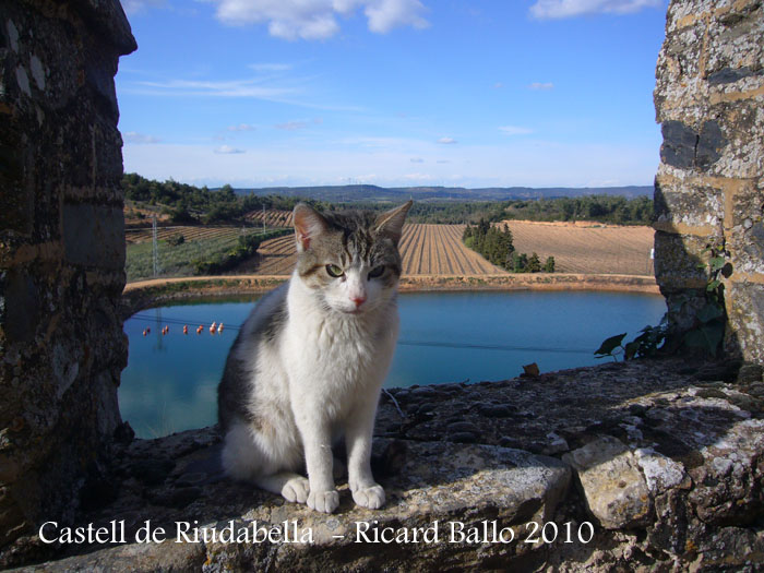 castell-de-riudabella-100401_514
