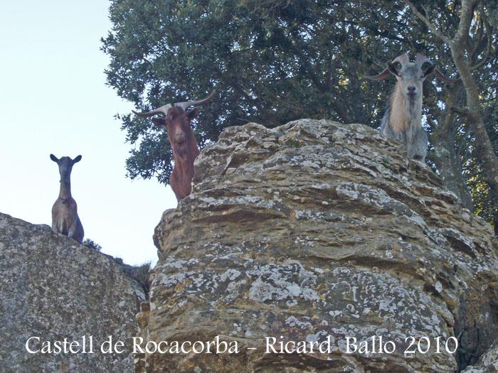 castell-de-rocacorba-100130_551bisblog