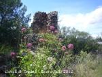 castell-de-toudell-120505_505