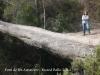 El Pont de les Arnaules – Manresa