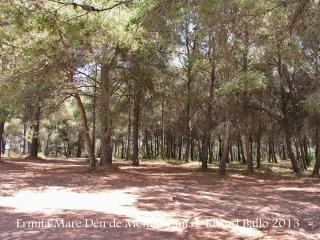 Ermita de la Mare de Déu de Montanyans – Castellet i la Gornal - Vista parcial de la pineda.