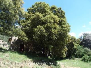 Quan ja estem a tocar de l'ermita la localitzarem aixoplugada sota aquest arbre