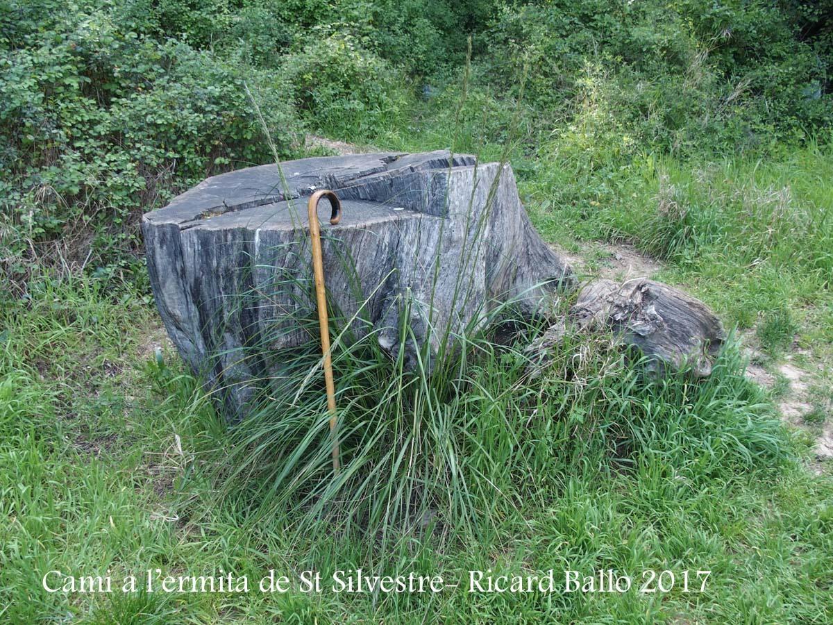 Camí a l\'Ermita de Sant Silvestre – Vallirana