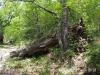 Camí d'accès a l'Església de Sant Andreu de Porreres – Vall de Bianya. Durant el recorregut podrem trobar alguns arbres de mides notables, alguns de vius i altres de morts ...