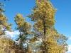 Camí a l'Església de Sant Iscle i Santa Victòria de Talltendre – Bellver de Cerdanya - En aquesta època de l'any els arbres ja es vesteixen amb les tonalitats de la tardor