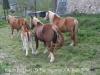 Església de Sant Pau Vell – Sant Pau de Segúries . Cavalls de bonica petja pasturant en un terreny proper a l'església.