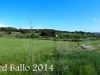 El Bages - Ricard Ballo 2014