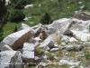 Estany petit de la Pera - Heus aquí un dels habitants de la zona: una marmota.