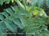 Jardí botànic Mar i Murtra – Blanes