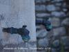 Monestir de Santa Maria de Vallbona – Vallbona de les Monges - Aquesta font ens recorda la Font de Baix, a L'Espluga de Francolí i també la Font de les Canelles, a Santa Coloma de Queralt