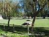 Parc de Sant Guillem de la Prada – Llívia