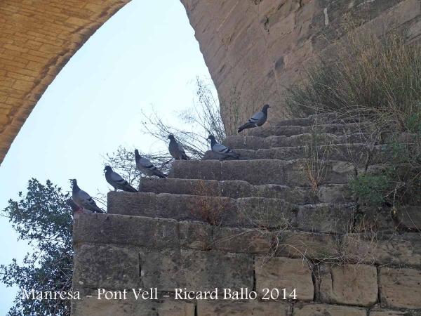 Manresa - Pont Vell - Sembla ser que n'hi ha un que no està gaire d'acord ...