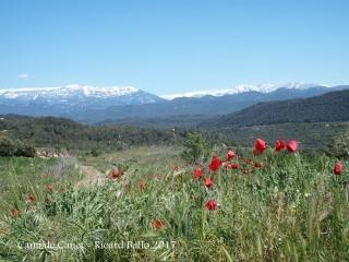 Camí al Pont del Molí de Canet – Clariana de Cardener