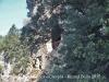 Sant Miquel de la Roca – Crespià
