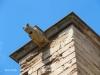 Seu Vella - Lleida - Claustre