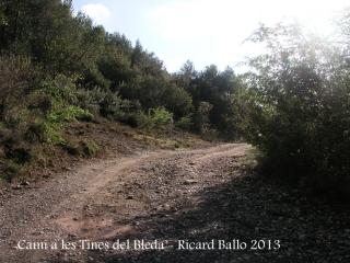 Camí a les Tines del Bleda i del Tosques