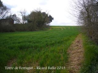 Camí d'accés a la torre de Ferragut. Voral del camp de conreu que hem recorregut (Aquesta fotografia està presa amb sentit invers a la marxa, però el voral és el que hi apareix).
