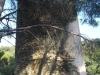 Part posterior (Vella) de la Torre de Sant Baldiri de Taballera – Port de la Selva