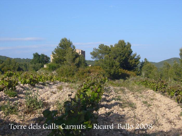 torre-dels-galls-carnuts-el-pla-de-manlleu-110505_030