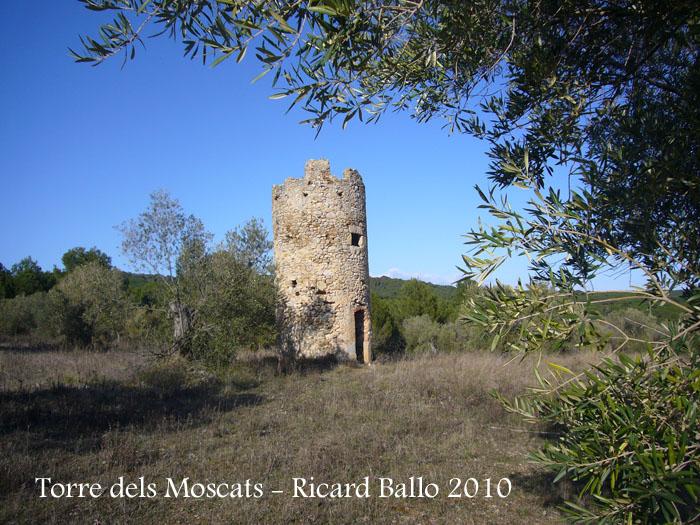 torre-dels-moscats-100220_503