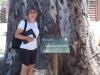 Tortosa - Arbre monumental - Eucaliptus de Jesús
